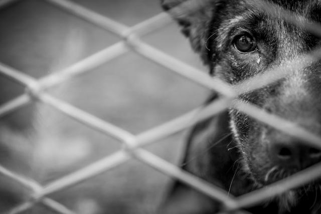 dog jail