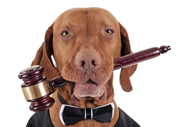 dog judge