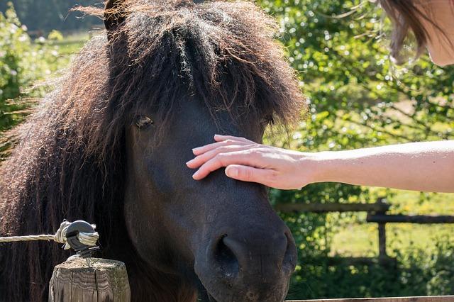 horse-798384_640