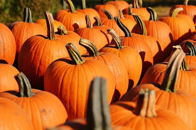 dc13 pumpkin-970235_640