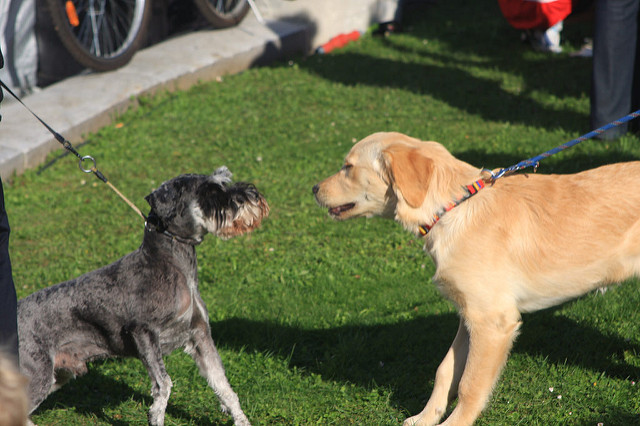 Don't let your dog keep approaching a dog after the owner says no! Image source: JorgWeingrill via Flickr