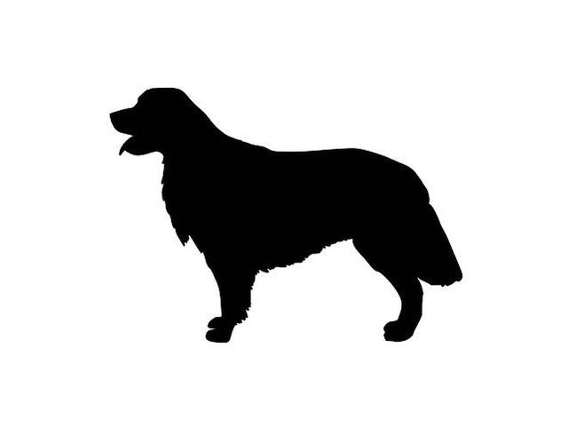 Quiz: Can You Identify The Dog Breed By Its Silhouette ...
