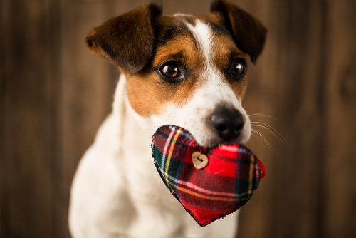Why Dogs Eat Dirty Underwear