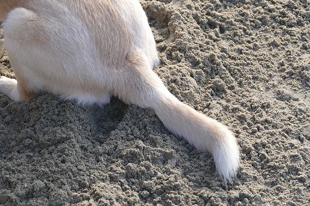 tail in sand