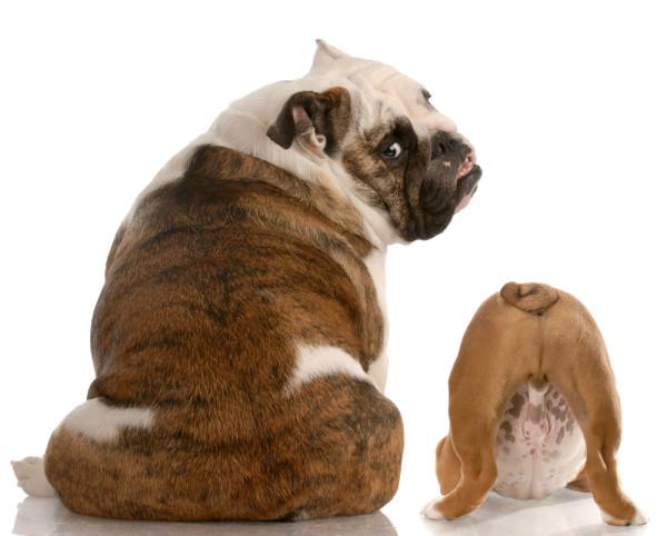Hvorfor har min hund lugter så dårlig-9434