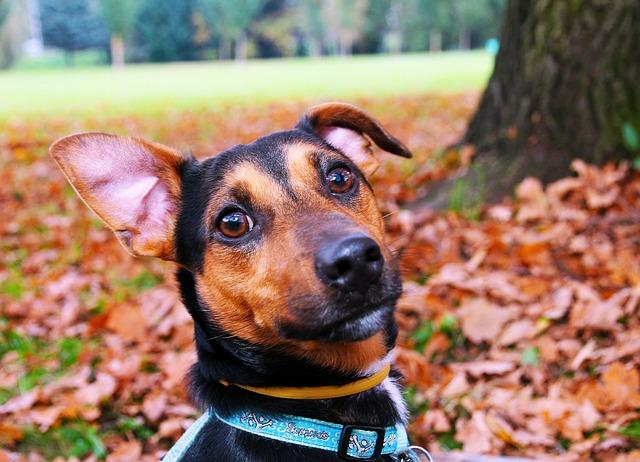 dog ear 3