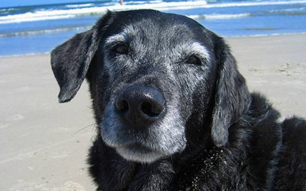 3 Amazing Ways To Honor A Dog Who Passed Away