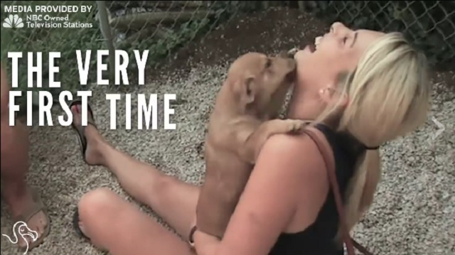 Watch The Heartwarming Moments When Rescued Pets Meet Their New Families For The First Time