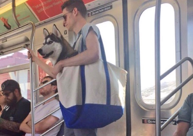 The Rule States That Dogs On The Subway Must Be In A