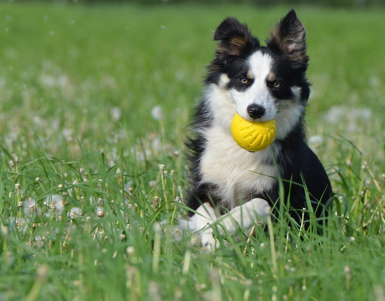 Dog Food Stuffable Toys