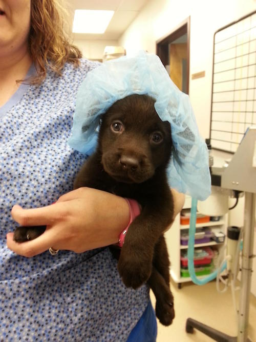 Woman Saves A Puppy With A Cleft Palate On Her 30th