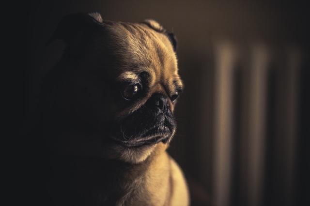 Hasil gambar untuk dog fear dark