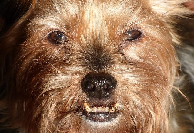 dog-1121472_640