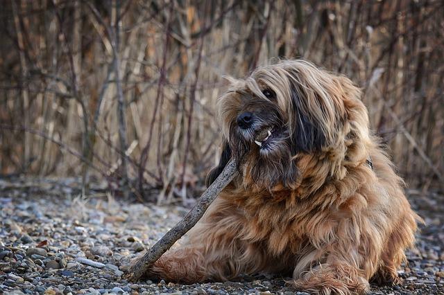 dog-1210110_640