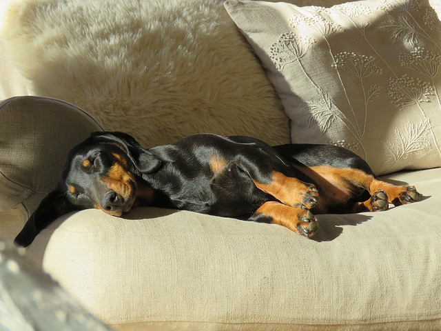 Ask A Vet: Why Does My Dog Twitch In His Sleep?