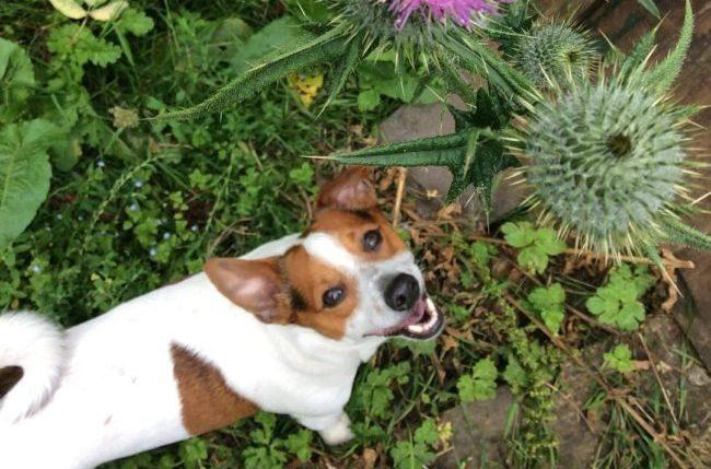 dogbee