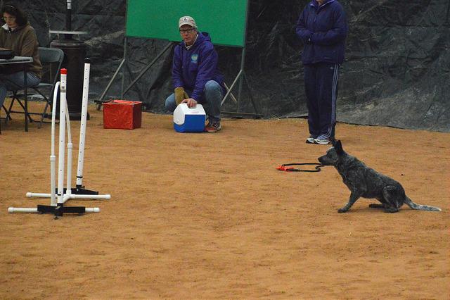 dogstay2