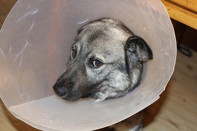 sick-dog-1063663_640