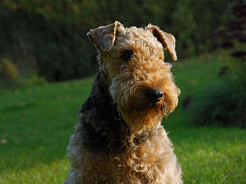 8 Most Popular Terrier Breeds