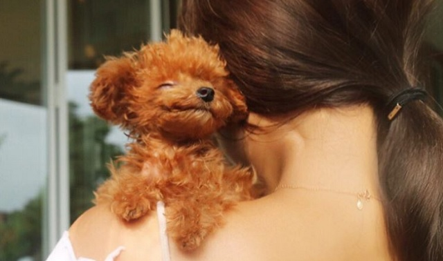 This Tiny Pup Is Like A Real Life Teddy Bear