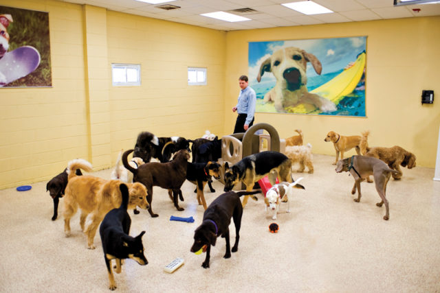 Doggie-Daycare-large-dogs