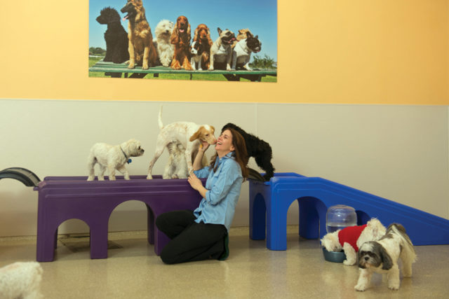 Doggie-Daycare-small-dogs