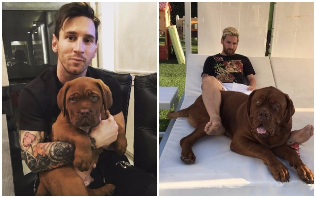 Image result for MESSI DOG
