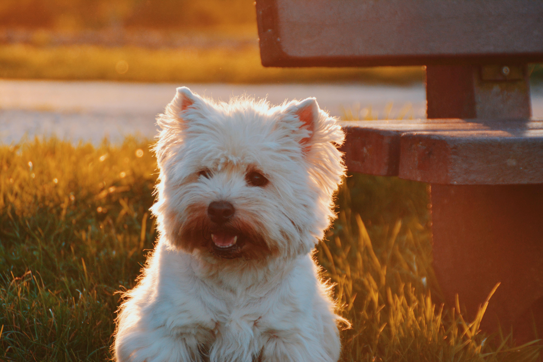 8 Most Popular Terrier Breeds Iheartdogs Com