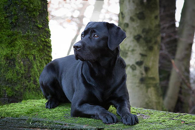 7 Dog Breeds That Need The Most Attention