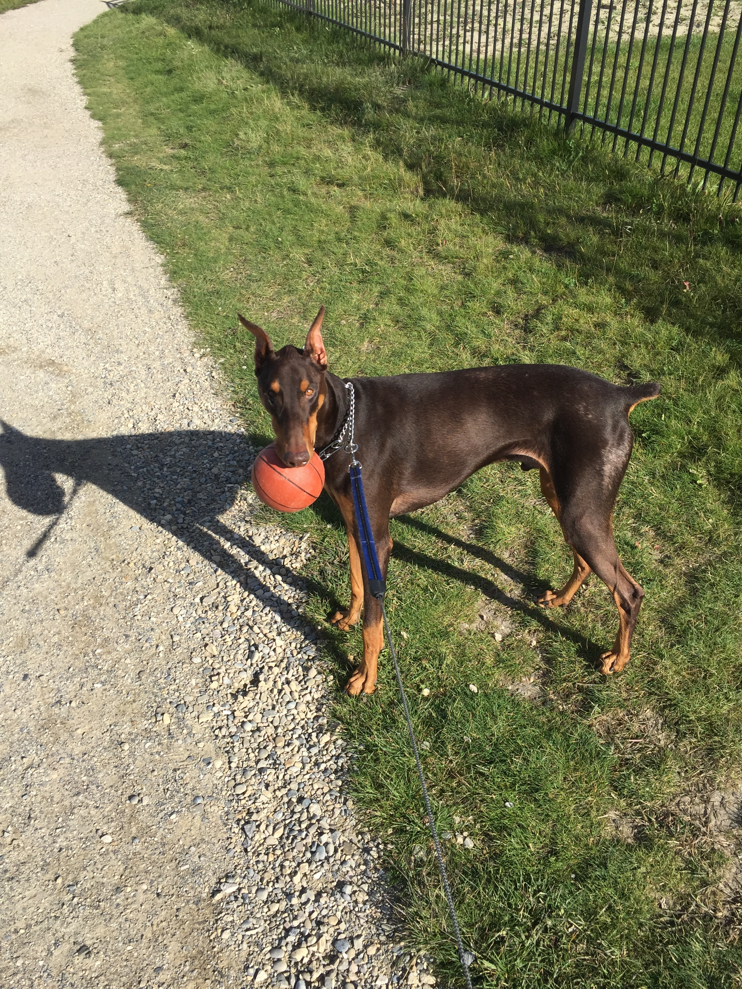 My wife and I were just wondering if there is any other dobe owners that have experienced this with a dog with food allergies and what they did to help him ...