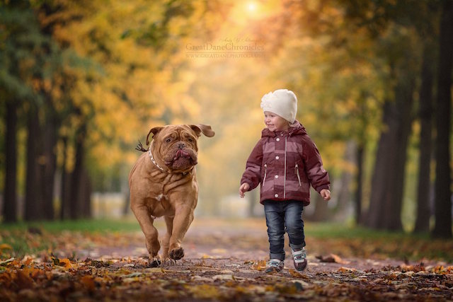 Little Kids And Their Big Dogs Shows The Magical Bond Between - Tiny children and their huge dogs photographed in adorable portraits by andy seliverstoff