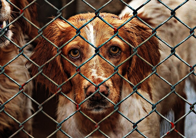 animal-welfare-1116205_640
