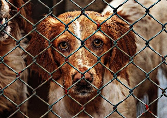 animal-welfare-1116205_640