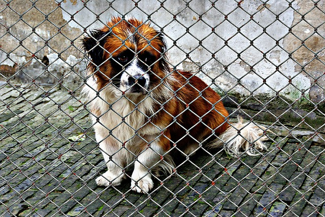 animal-welfare-1116206_640