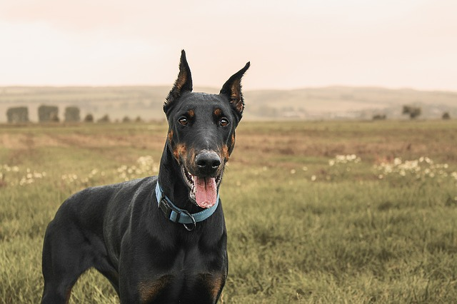 12 Dog Breeds That Deserve To Be Treated Better