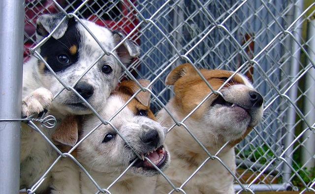 dog-1441396_640