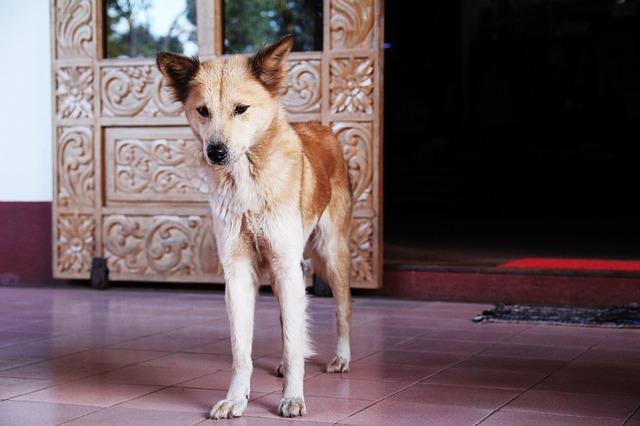 dog-1559747_640