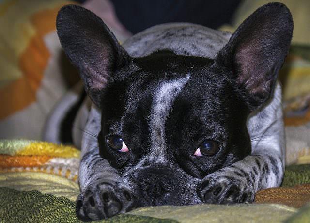 dog-1743060_640