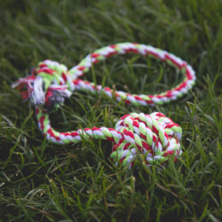 Project Play Rope Tug: Get a Toy, Give a Toy to a Shelter Dog In Need