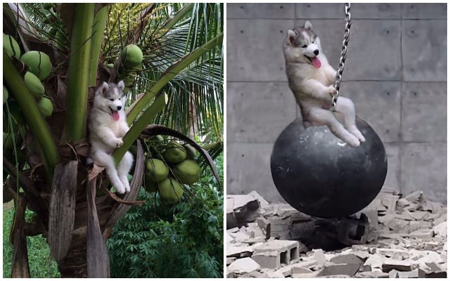 Dog Gets Stuck In Coconut Tree Provides Photoshop