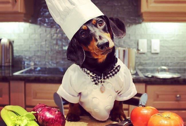 Chef Creates Gourmet Thanksgiving Dinners For Shelter Dogs