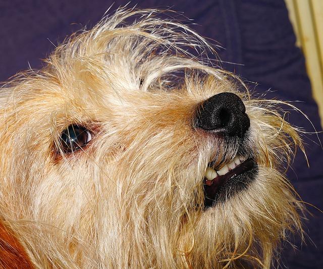 dog-1511085_640