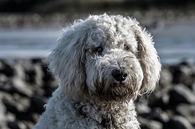dog-1708067_640