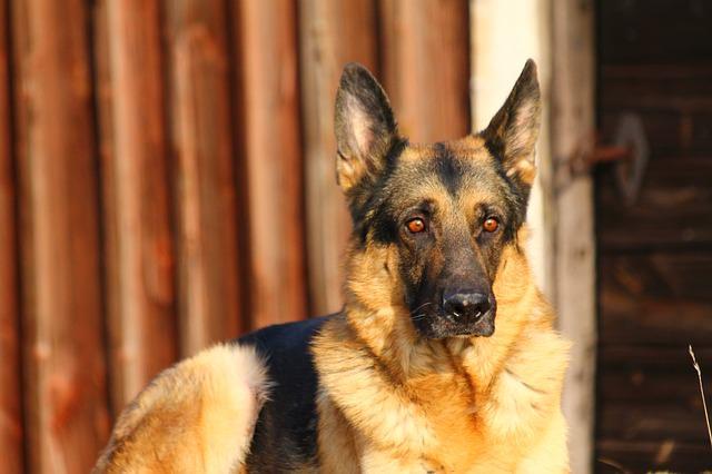 dog-323270_640