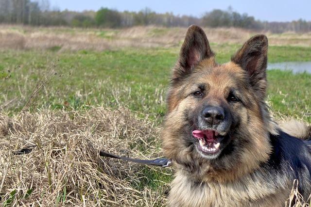 dog-480200_640