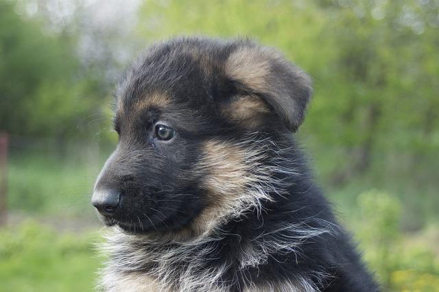 puppy-1359653_640
