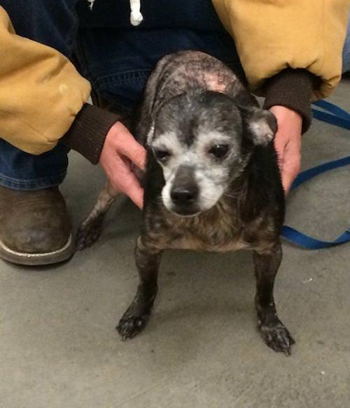 Kaboodle. Image Source: Elizabethton County Animal Shelter via Petfinder