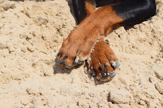 Ask A Vet: Why Does My Dog Hate To Have His Nails Trimmed?