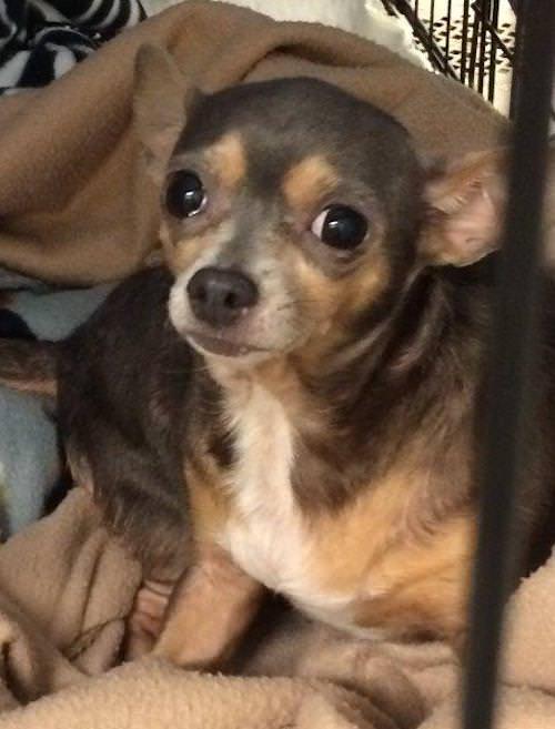 Kit. Image Source: Elizabethton County Animal Shelter via Petfinder