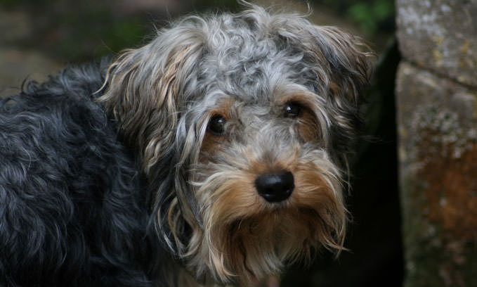 3 Amazing Ways To Honor A Yorkie Who Passed Away